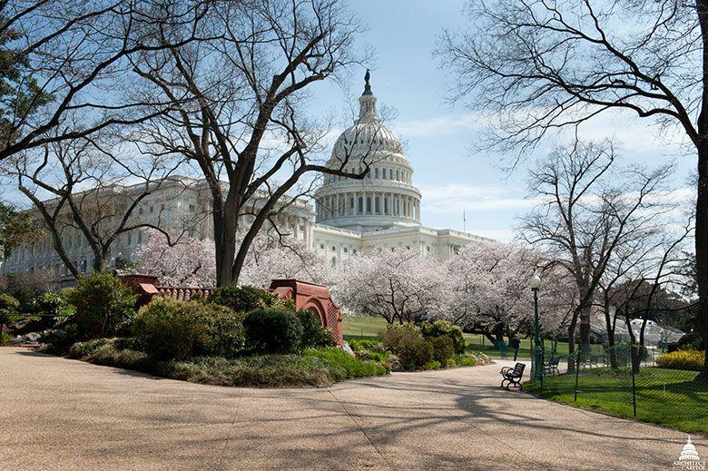 US Capitol in Winter